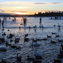 sunset at ice rink in Reykjavik with ducks
