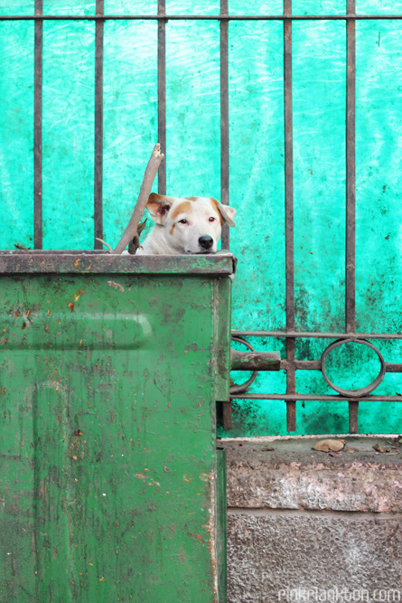 dog in dumpster in New Delhi