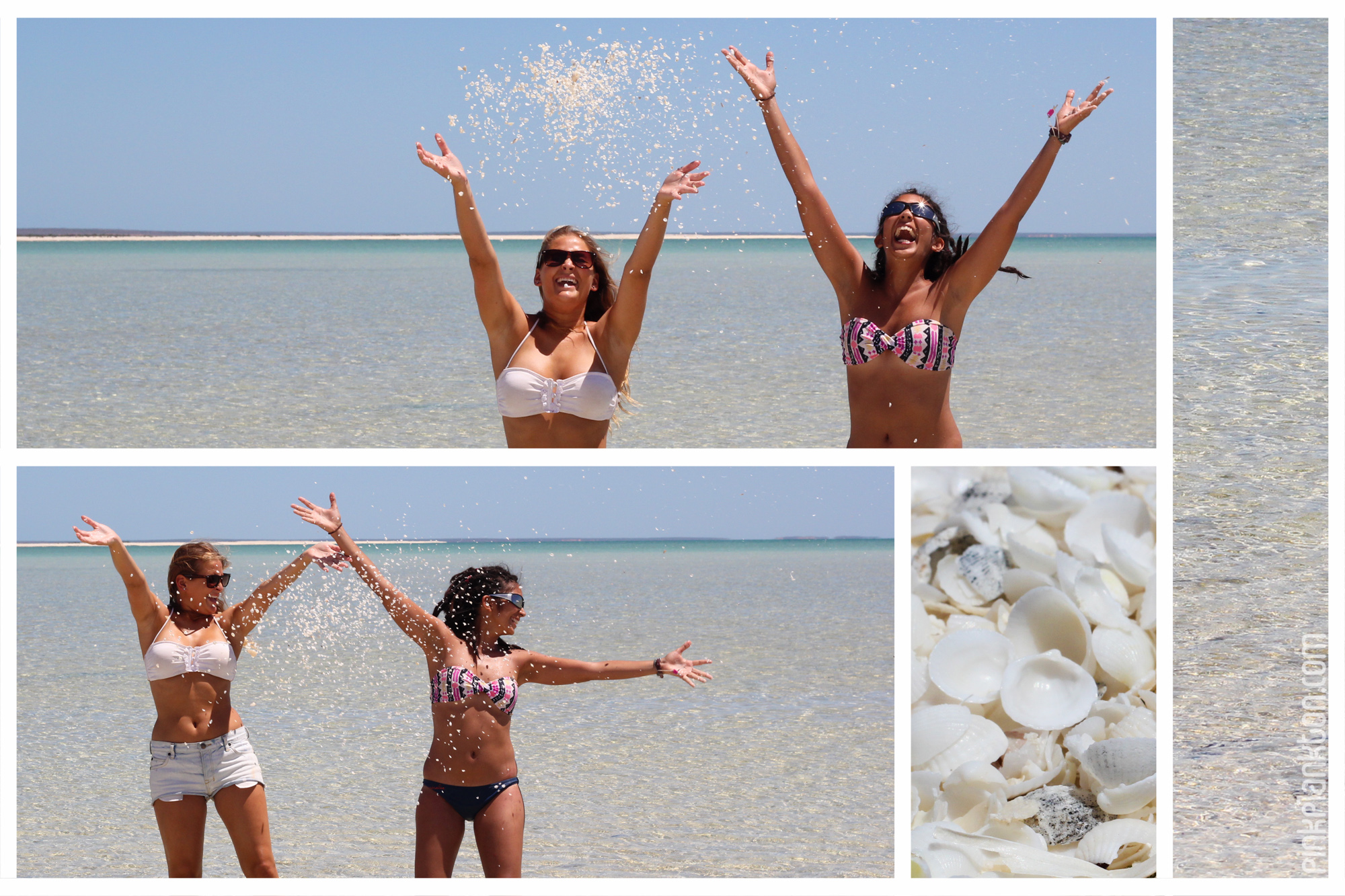 collage of beach and sea shells