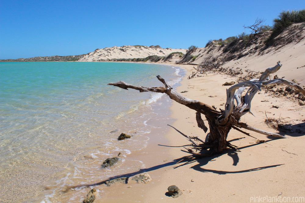 Shark Bay and sand dunes on the West Coast of Australia