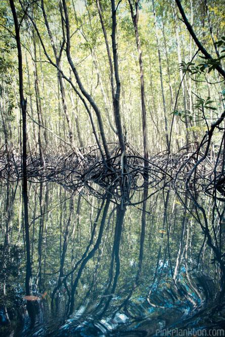 mangrove forest in Andaman Sea, Krabi, Thailand