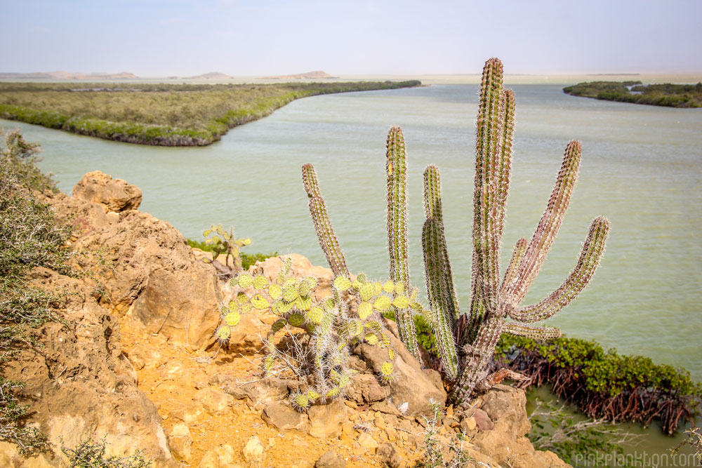 cactus at Punta Gallinas, Colombia