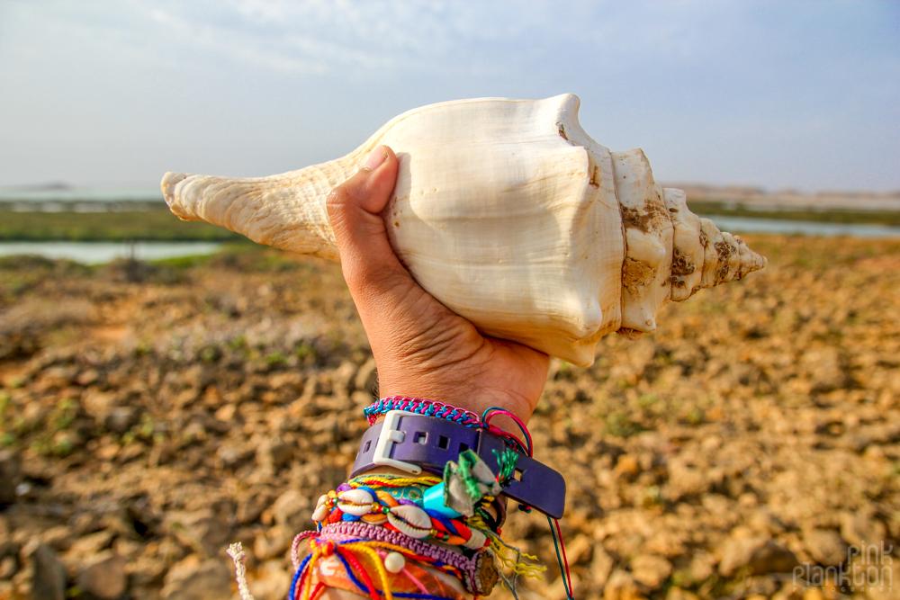 punta-gallinas-shell