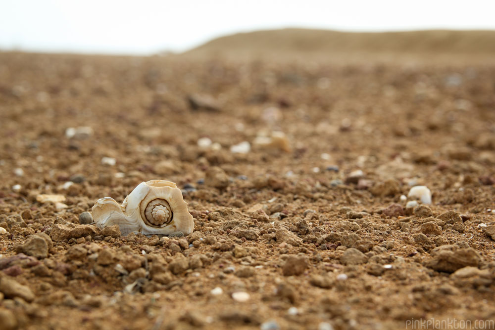 shell in desert in Punta Gallinas, Colombia