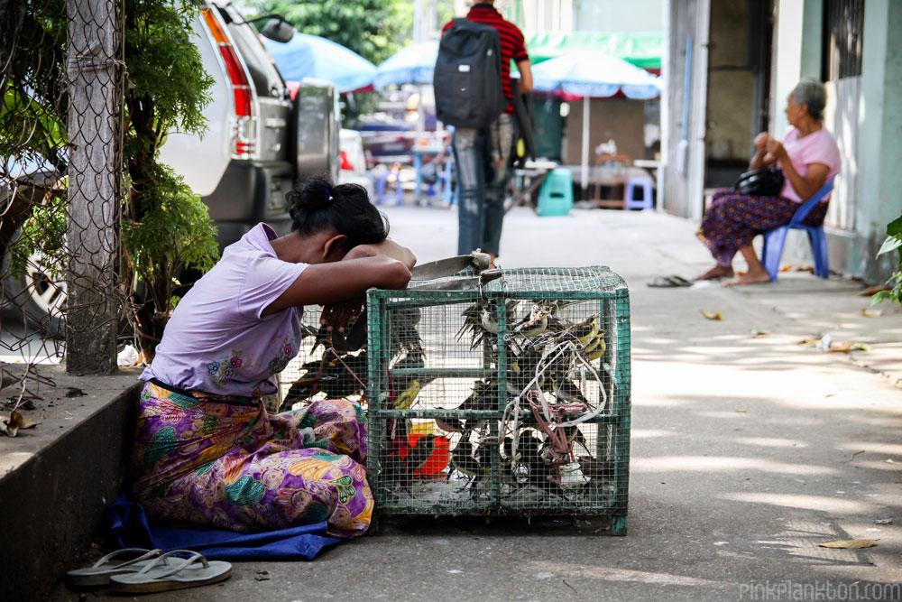 bird seller in Yangon, Myanmar