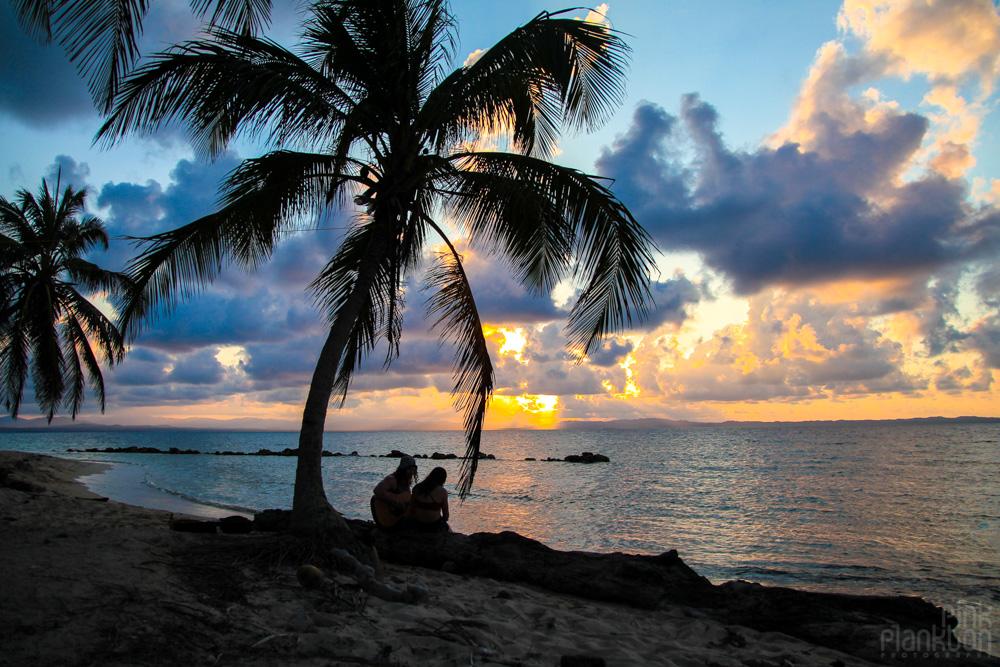 sunset on island with palm tree