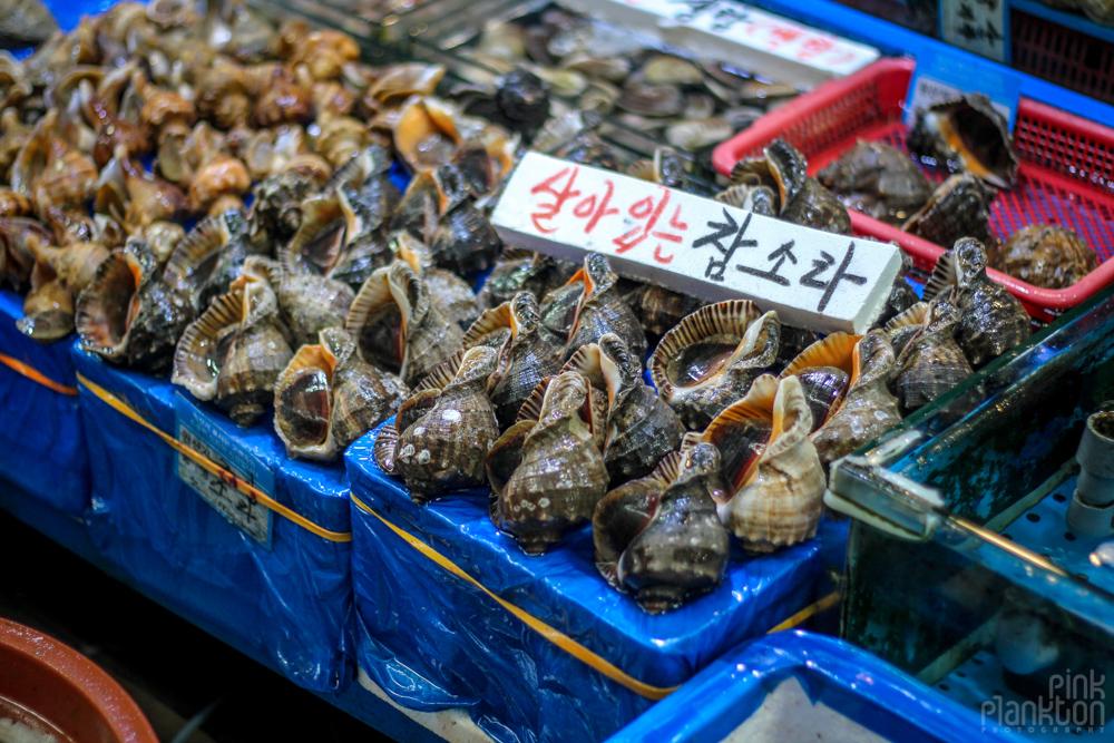 shells in fish market in Seoul, South Korea