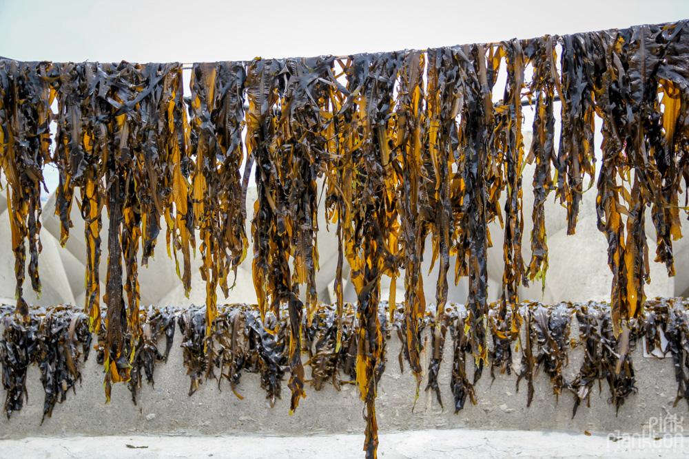 seaweed drying in South Korea