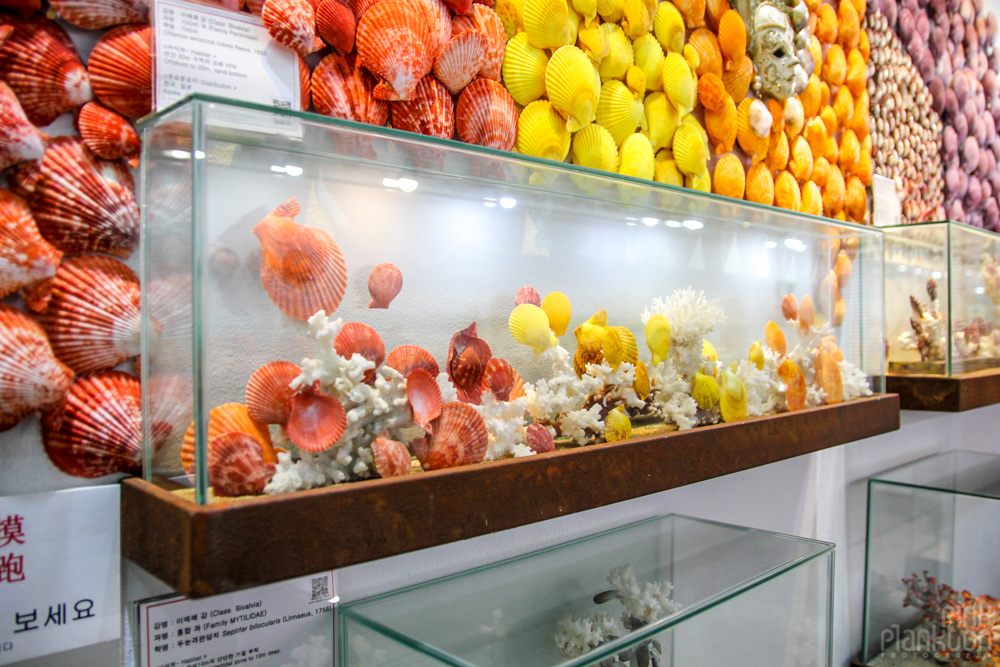Worldwide Seashell Museum on Jeju Island