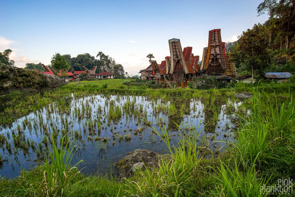 Tongkonan boat houses and rice paddies in Toraja village, Sulawesi