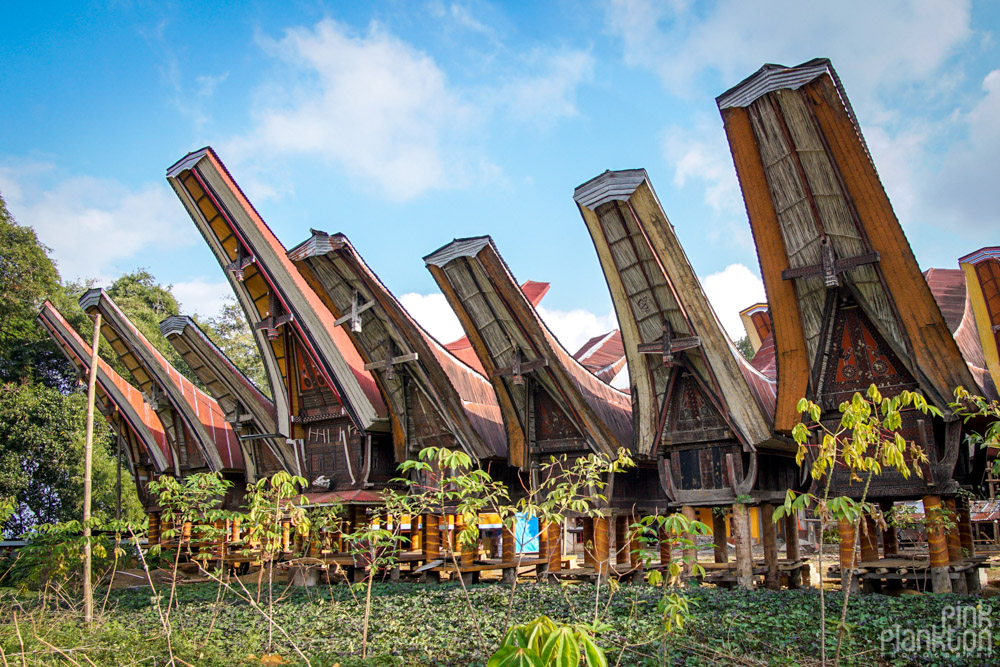 Tongkonan boat houses in Toraja village, Sulawesi
