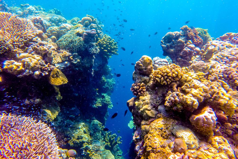 colorful coral reef on Bunaken Island, Sulawesi