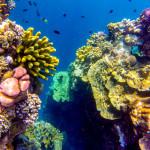 17 Photos That Prove Bunaken Island Is a Snorkeler's Dream