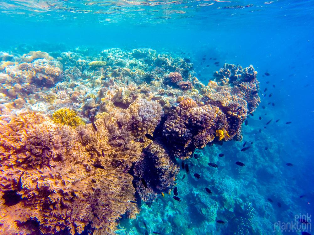 fringe coral reef on Bunaken Island, Sulawesi