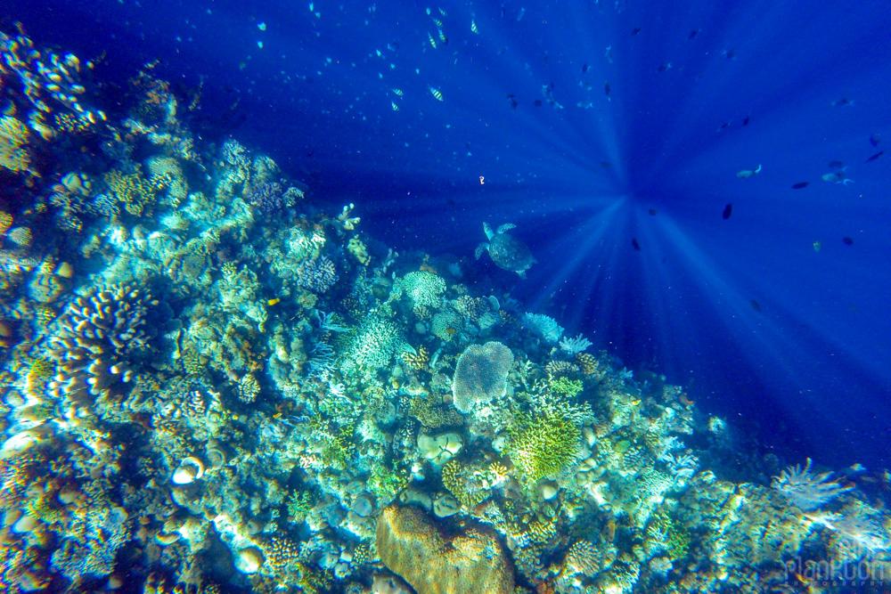 turtle and coral reef on Bunaken Island, Sulawesi