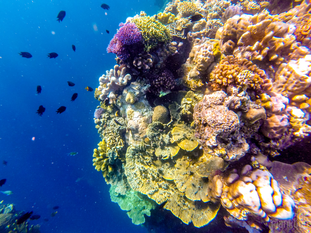 colorful coral reef on Bunaken Island, Sulawesi