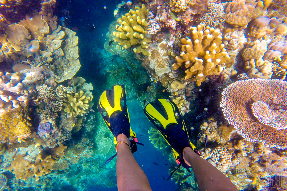 snorkeling colorful coral reef on Bunaken Island, Sulawesi