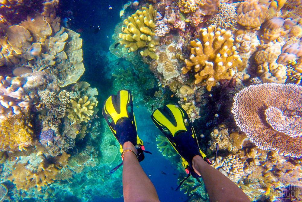 snorkeling colorful coral reef on Bunaken Island, Sulawesi