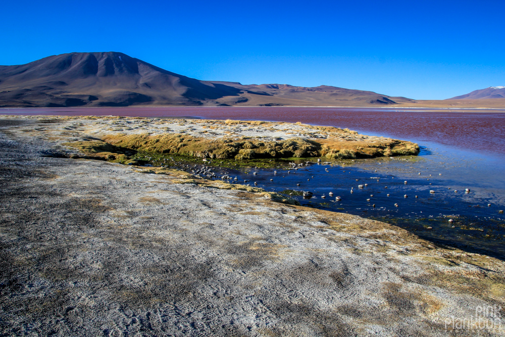 Bolivia's Laguna Colorada red lagoon
