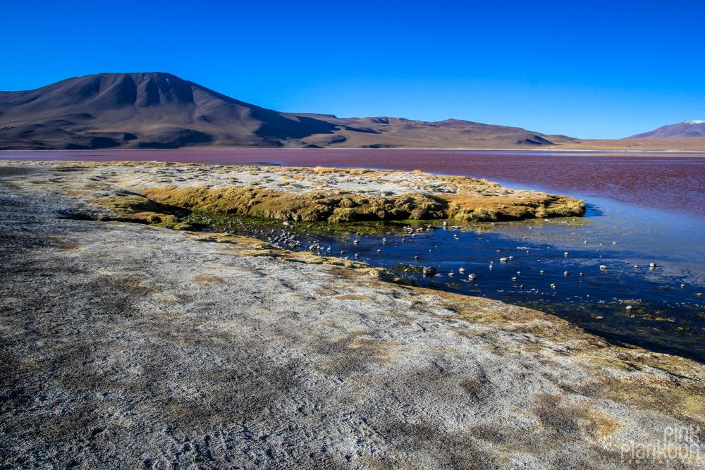 Bolivia's Laguna Colorada red lagoon