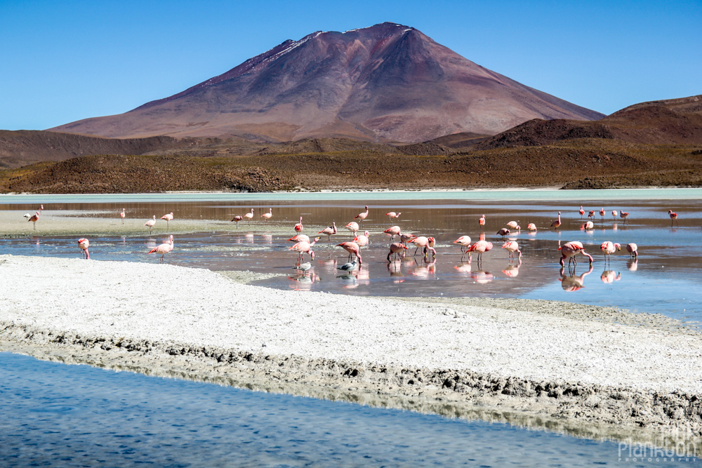 pink flamingos, volcano, and a lagoon in Bolivia's desert