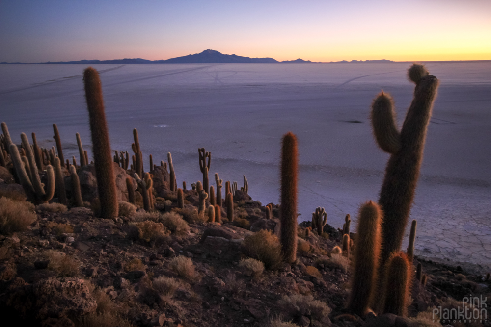 cacti and sunrise on Bolivia's Isla Incahuasi
