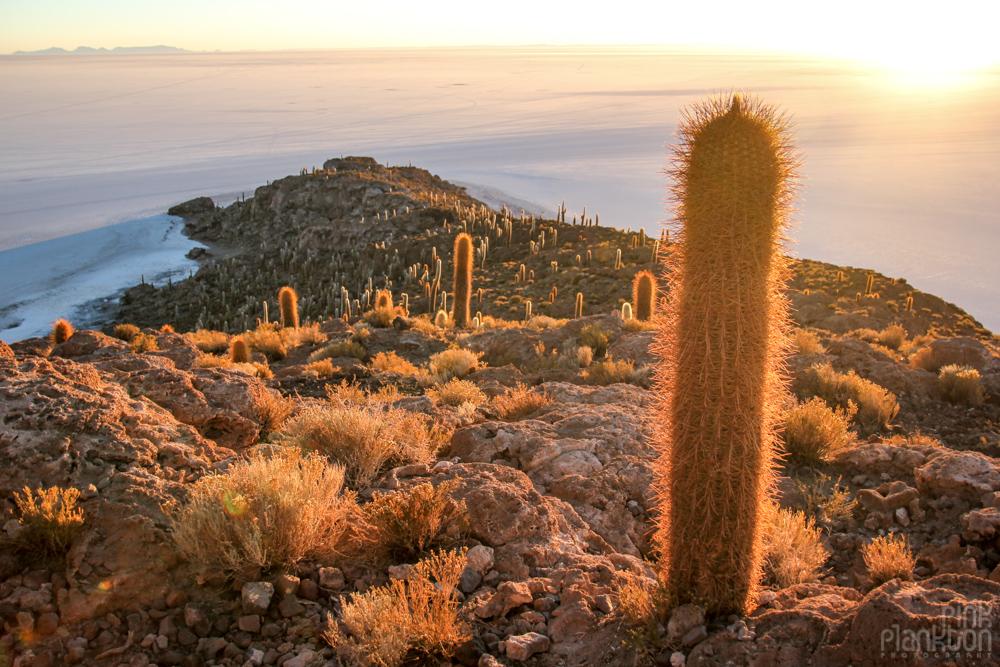 cacti and sunrise on Bolivia's Isla Incahuasi