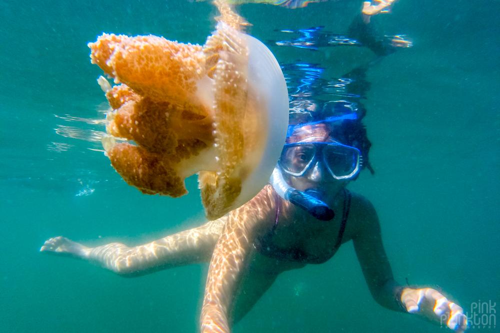 snorkeler in jellyfish lake in Togean Islands, Sulawesi, Indonesia