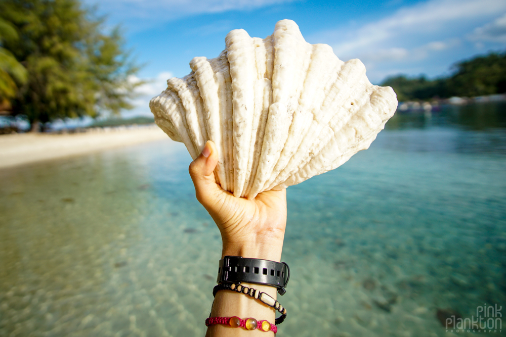 large shell at Fadhila Cottages in the Togean Islands