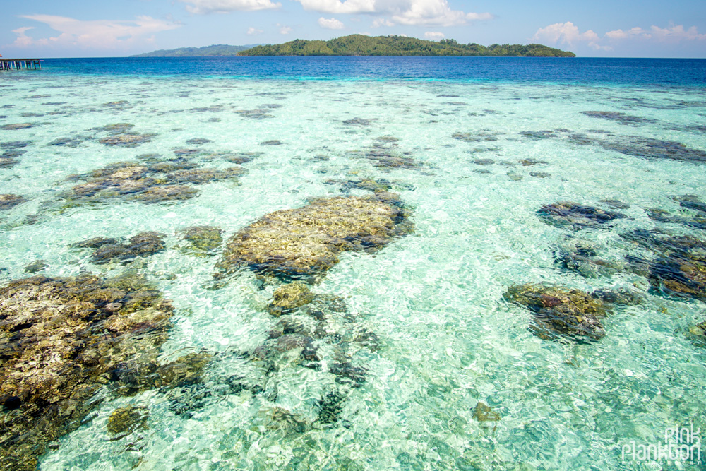 coral and clear water of Pulau Papan in the Togean Islands