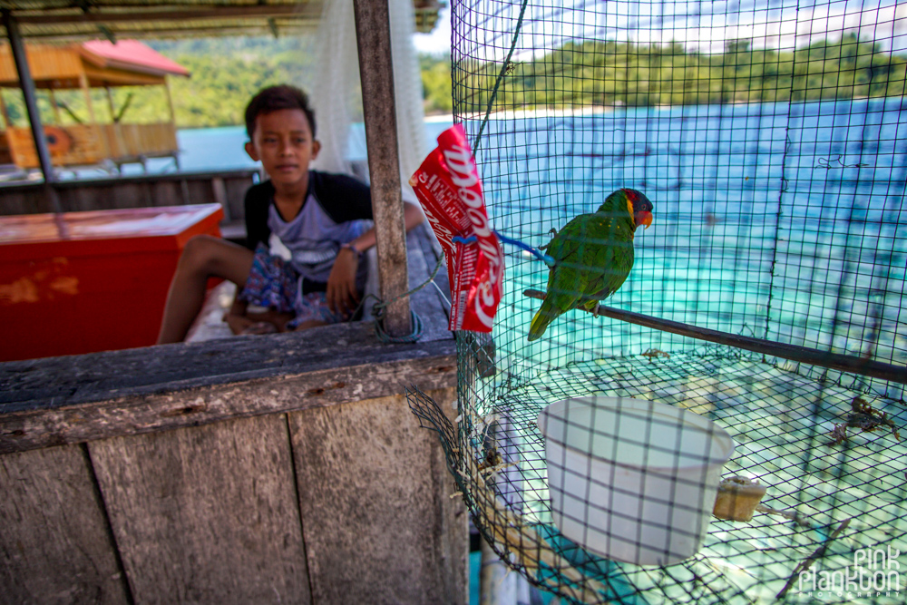 bird and kid on Pulau Papan in the Togean Islands