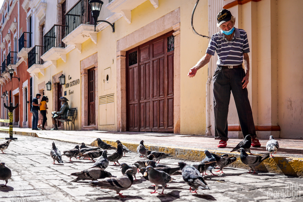man feeding pigeons on the streets of Campeche