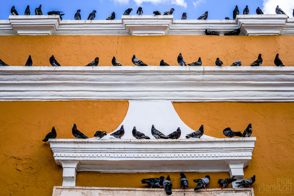many pigeons on a building in Campeche central square