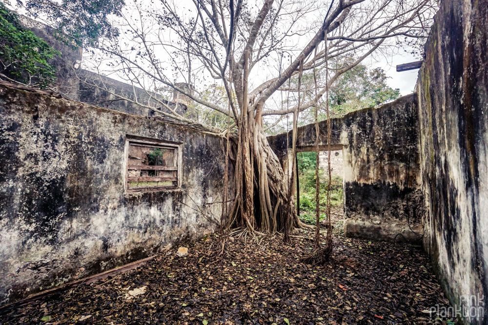 trees taking over an abandoned building in Minsebalam ghost town